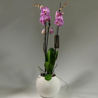 Send orchids to Istanbul Turkey