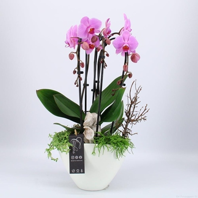 Orchid arrangements to Istanbul