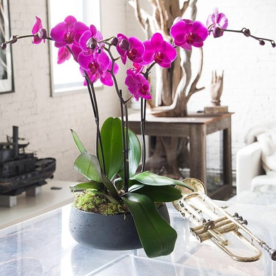 Orchid plants delivery in Istanbul