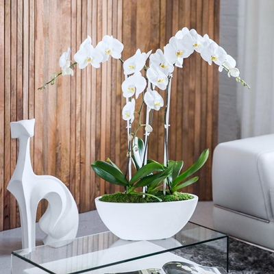 Orchids delivery in Istanbul Turkey
