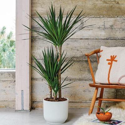 Send houseplants to Istanbul