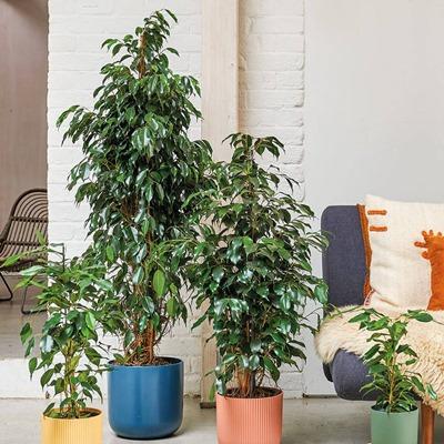 Send plants Istanbul Turkey